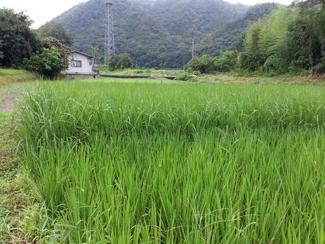 徳島から岡山へ移動して・・・_c0226146_16225591.jpg