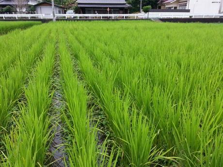 徳島から岡山へ移動して・・・_c0226146_16274398.jpg