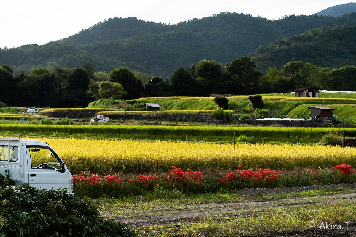京都 嵯峨野の彼岸花 -1-_f0152550_20591942.jpg