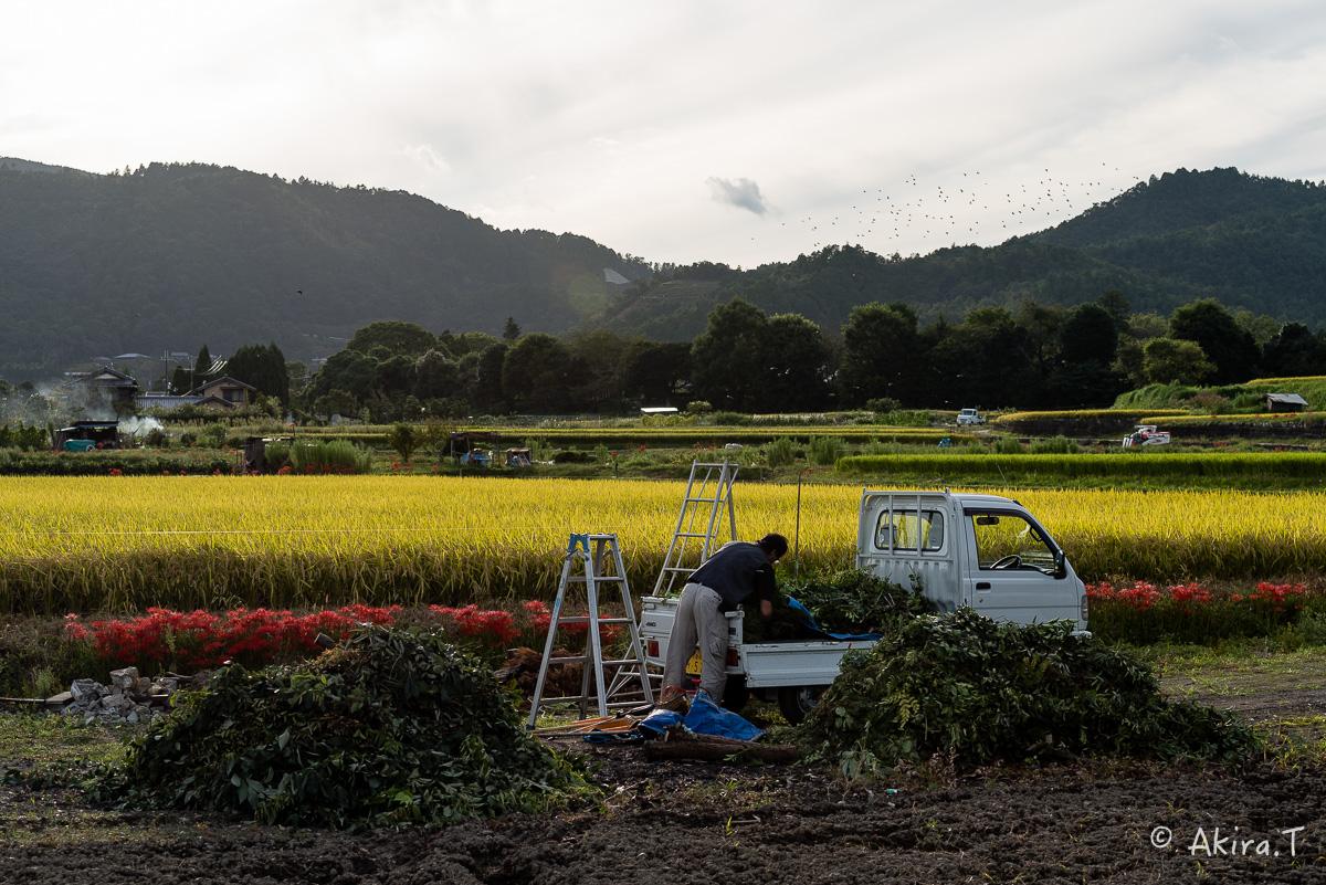 京都 嵯峨野の彼岸花 -1-_f0152550_20594039.jpg