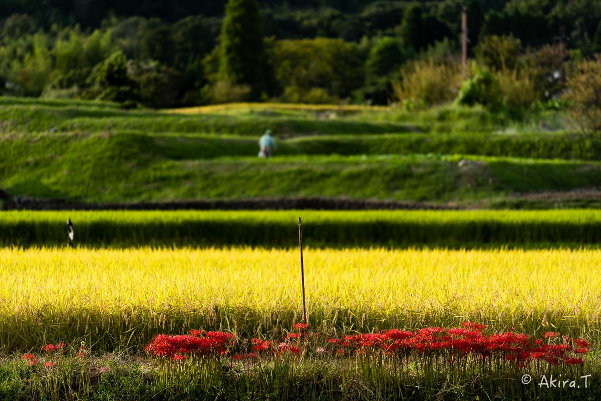 京都 嵯峨野の彼岸花 -1-_f0152550_2141239.jpg