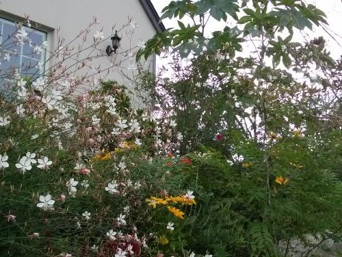 秋の庭_f0228967_12400451.jpg