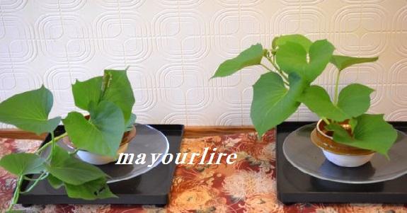 9月 テーブルコーディネート マユールライラ 海吉教室_d0169179_2222340.jpg
