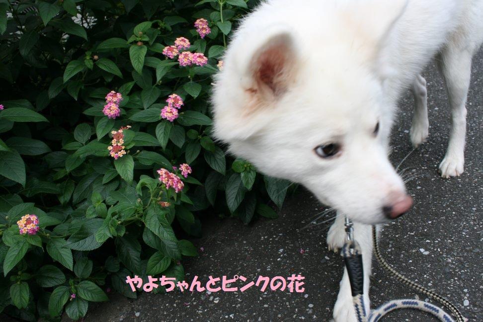 やよちゃんのお散歩_f0242002_1344486.jpg