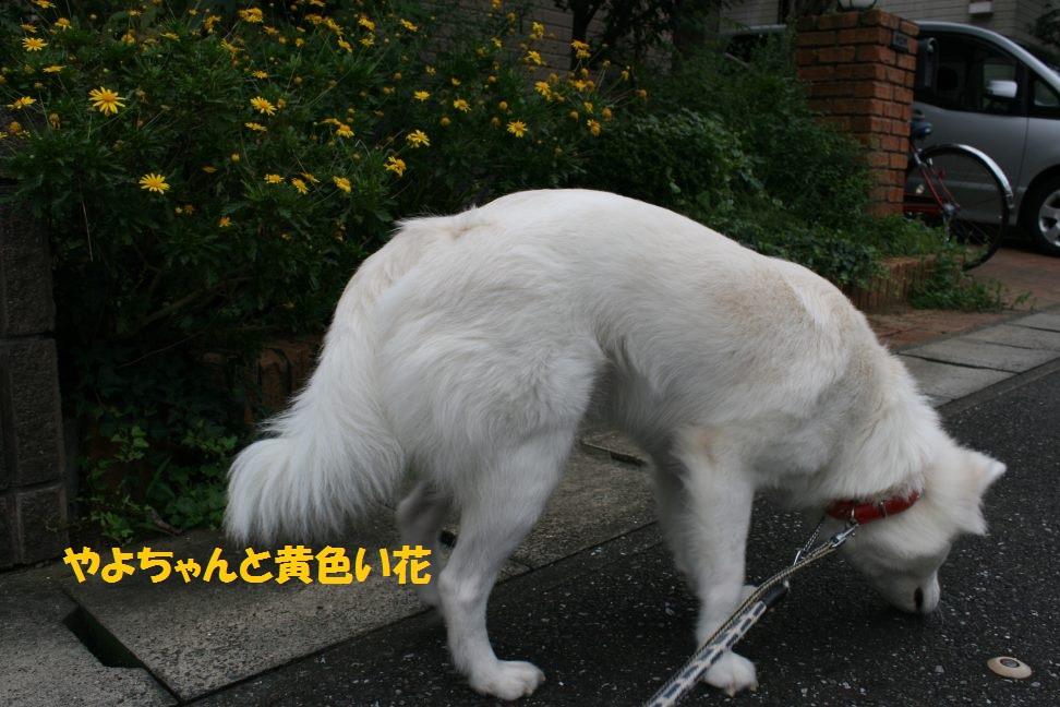 やよちゃんのお散歩_f0242002_1344559.jpg
