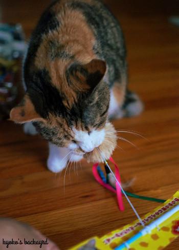 嬉しい小包と、フライングする猫_b0253205_23493355.jpg