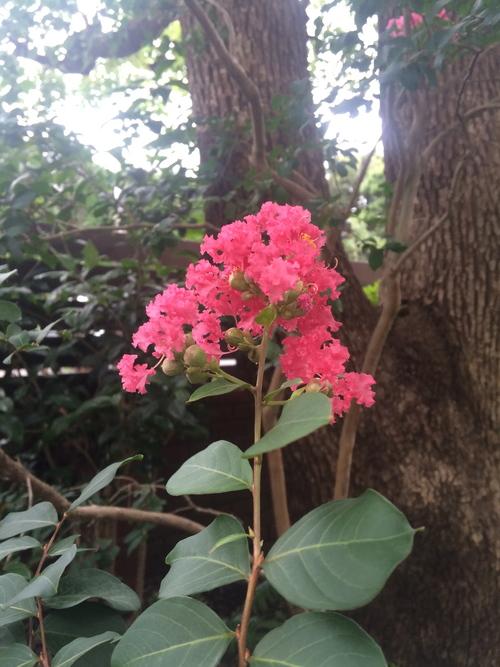 トトモニの庭 秋編_a0148909_7481144.jpg