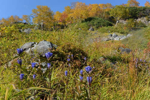 "2015年9月『錦織りなす大雪山』  September 2015 ""Autumn Colour in Taisetsu Mountains\"" _c0219616_7573627.jpg"