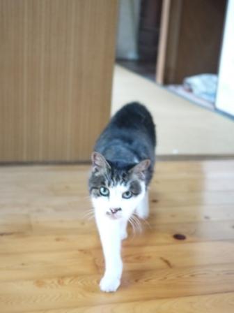 猫のお留守番 サンくんツキくん編。_a0143140_2321054.jpg