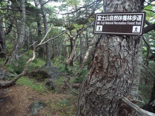 9月16日 富士山・宝永山火口の下見_e0145782_6113550.jpg