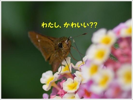 b0175688_00265048.jpg