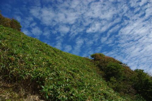 No1:四国寒風山へ日帰り登山しました。_d0341514_15375949.jpg