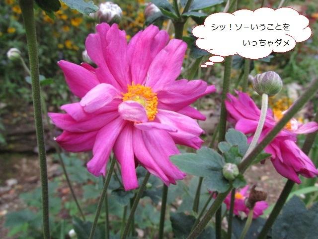 f0341616_17363287.jpg