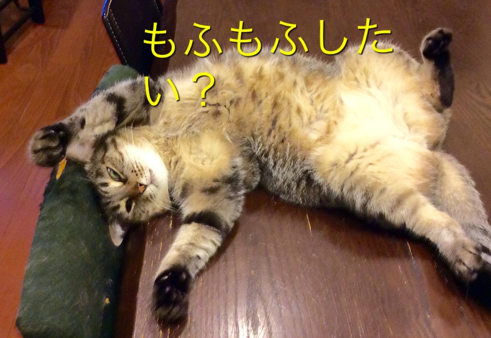 猫小劇場②_c0366722_08310974.jpeg
