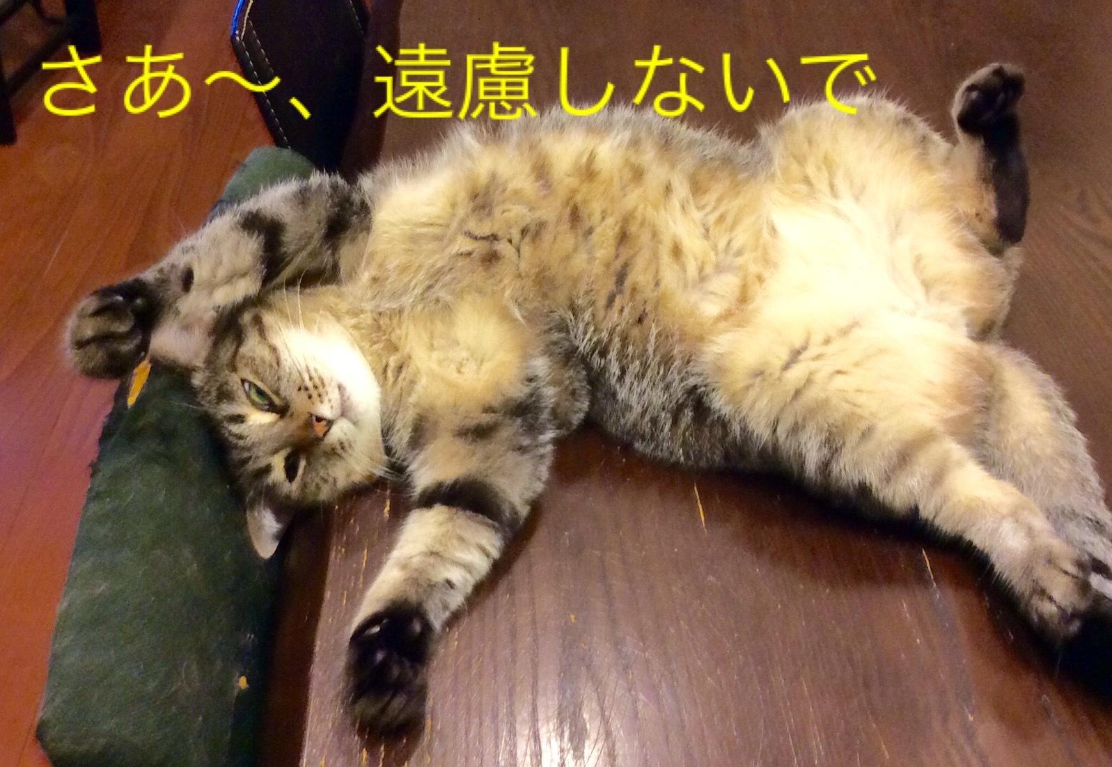 猫小劇場②_c0366722_08314885.jpeg