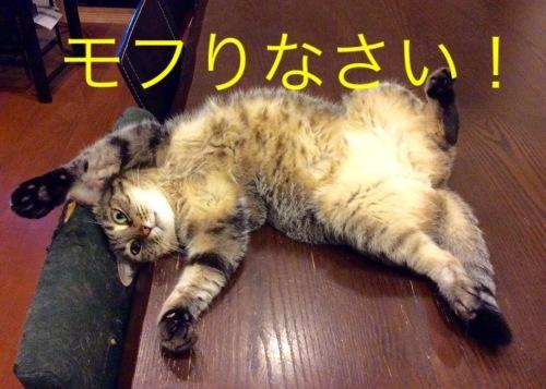 猫小劇場②_c0366722_08320673.jpeg