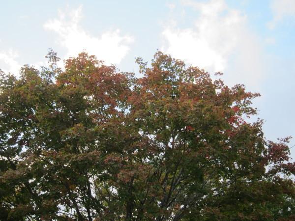 Fall time nature in SweetGrass ーSG秋便り_b0174425_17585354.jpg