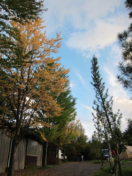 Fall time nature in SweetGrass ーSG秋便り_b0174425_18010091.jpg