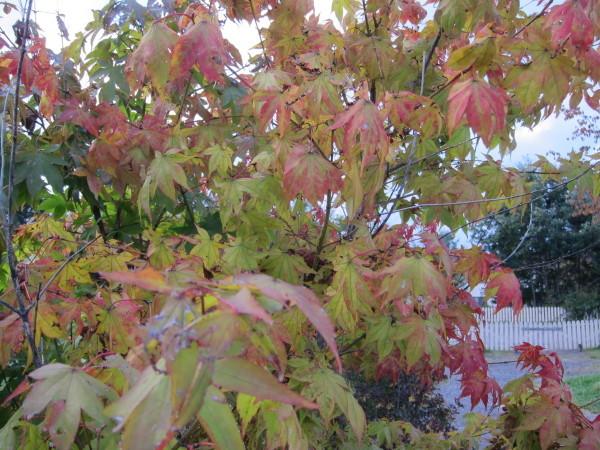 Fall time nature in SweetGrass ーSG秋便り_b0174425_18015482.jpg