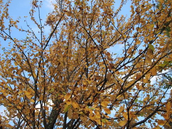 Fall time nature in SweetGrass ーSG秋便り_b0174425_18255457.jpg