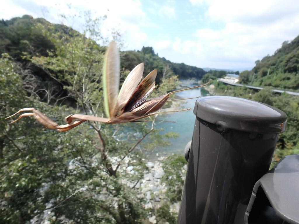 ビオビオⅡで奈良県吉野川(3回目)_c0113733_23574424.jpg
