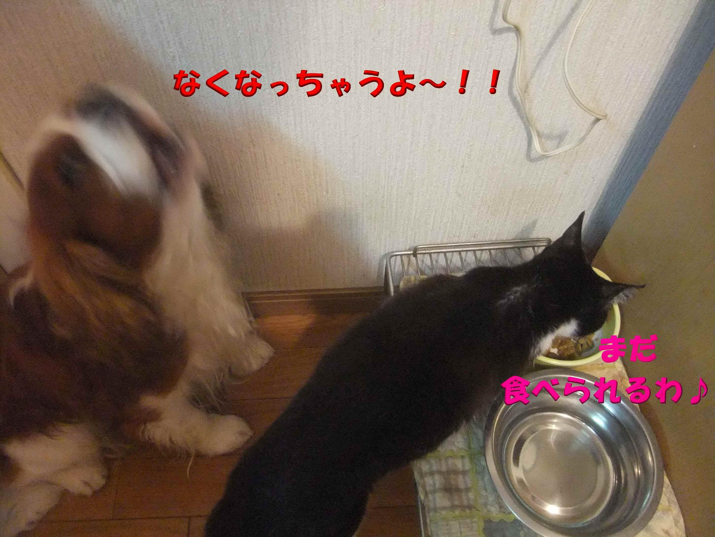 b0165139_10432020.jpg