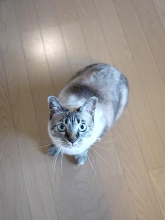 猫のお留守番 カン太くんルノーちゃん編。_a0143140_19511782.jpg