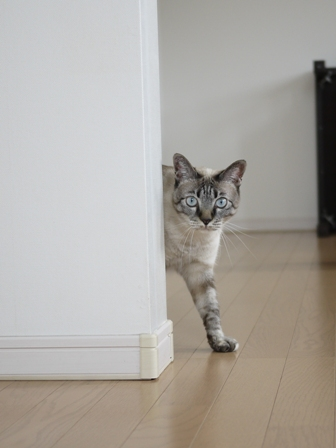 猫のお留守番 カン太くんルノーちゃん編。_a0143140_19524247.jpg