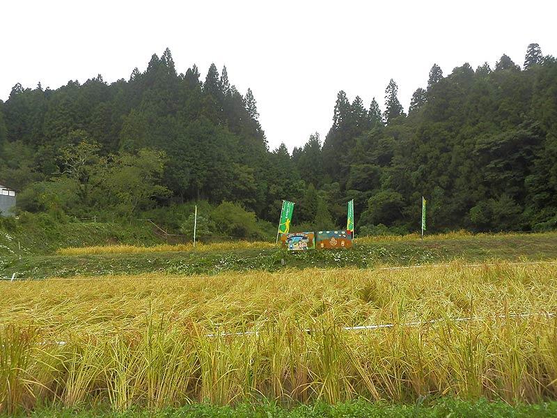 稲刈り体験(月光原小・西根小)_d0247484_1343356.jpg