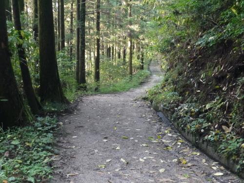 糸島の森と滝と・・・_a0315918_19192442.jpg