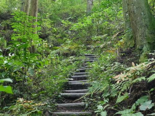 糸島の森と滝と・・・_a0315918_19201460.jpg