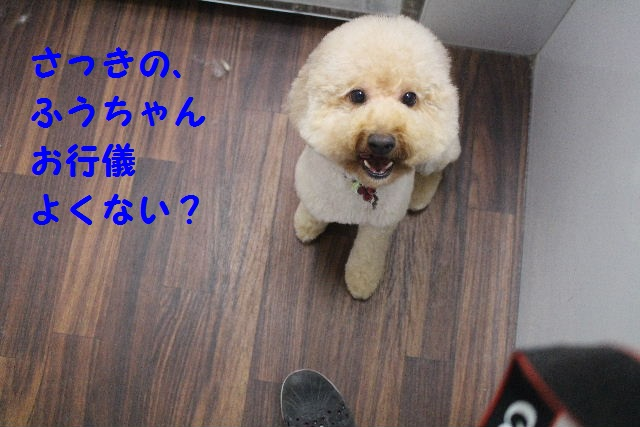 やちむん♪_b0130018_8224538.jpg