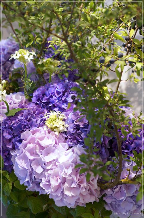 Rosebudのモーヴの紫陽花_f0151946_2335599.jpg