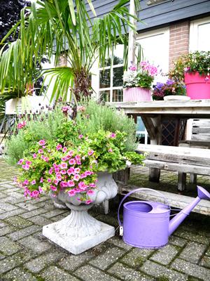 オランダflower shop ♪_d0113182_2254951.jpg