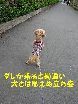 月命日に墓参り_e0222588_17370802.jpg