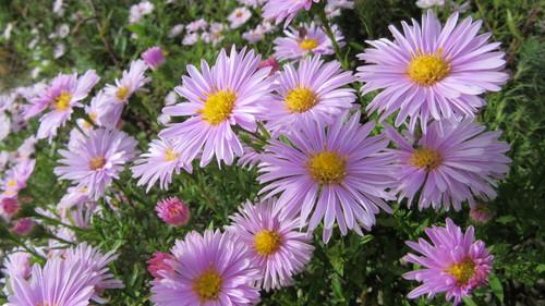 ロックガーデンの花々14_b0219993_15333156.jpg