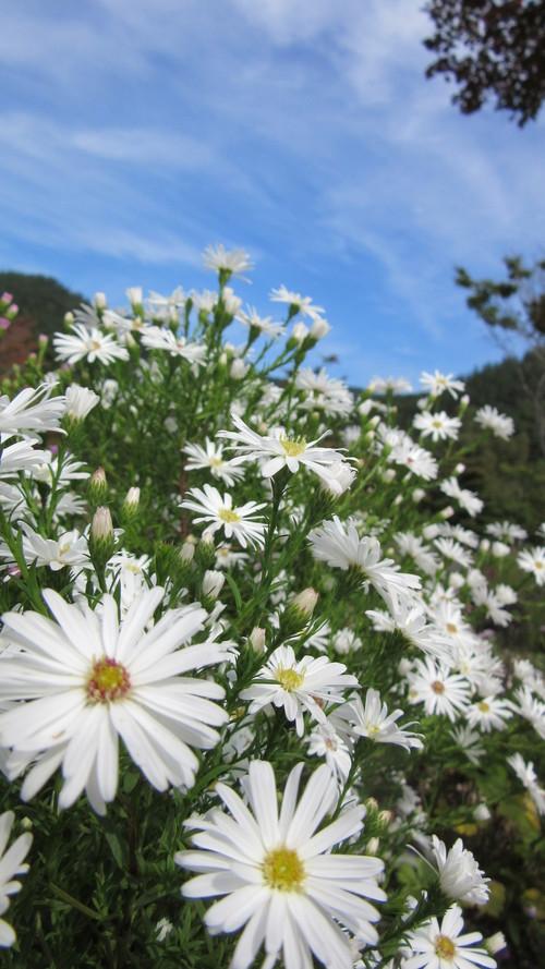 ロックガーデンの花々14_b0219993_15335037.jpg