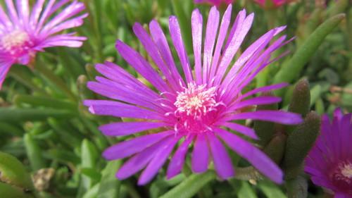 ロックガーデンの花々14_b0219993_1533881.jpg