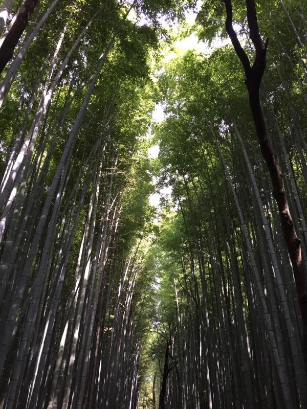 京都~大阪_f0224804_1518222.jpg
