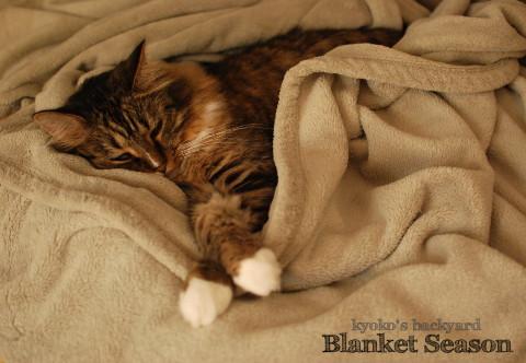 猫も嬉しい毛布の季節 2_b0253205_02235414.jpg