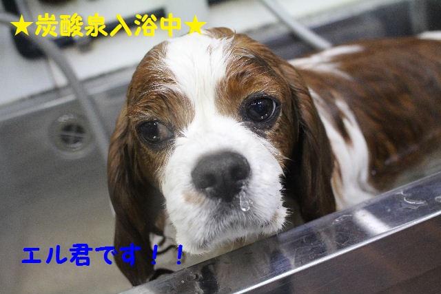 ハロウィ~ン♪_b0130018_20512195.jpg