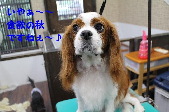 ハロウィ~ン♪_b0130018_2051588.jpg