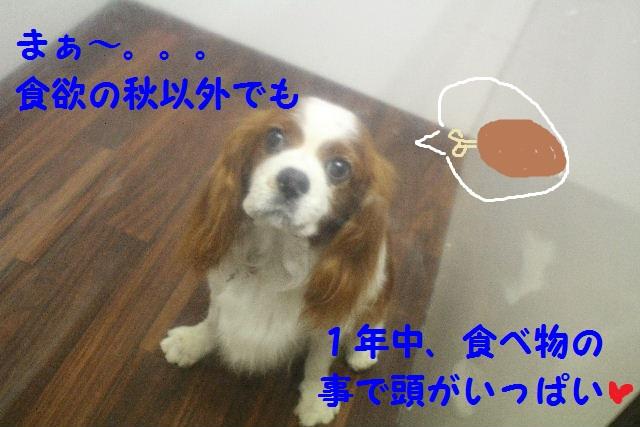 ハロウィ~ン♪_b0130018_20521283.jpg