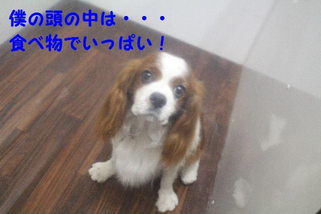 ハロウィ~ン♪_b0130018_2052594.jpg