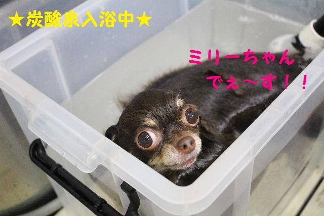 ハロウィ~ン♪_b0130018_20531651.jpg