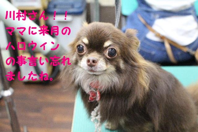ハロウィ~ン♪_b0130018_2054041.jpg