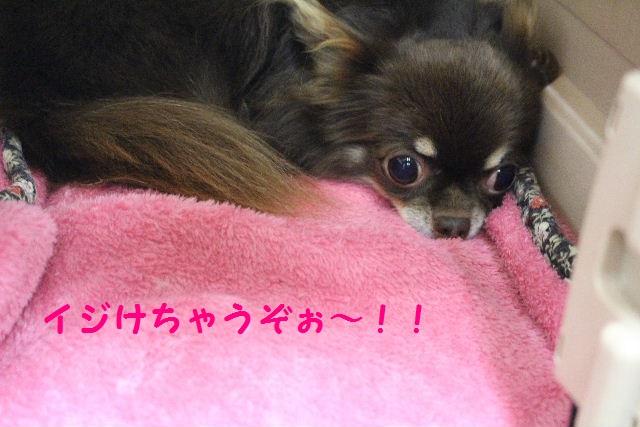 ハロウィ~ン♪_b0130018_205429100.jpg