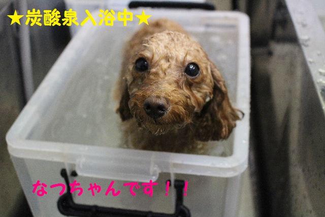 ハロウィ~ン♪_b0130018_20552687.jpg