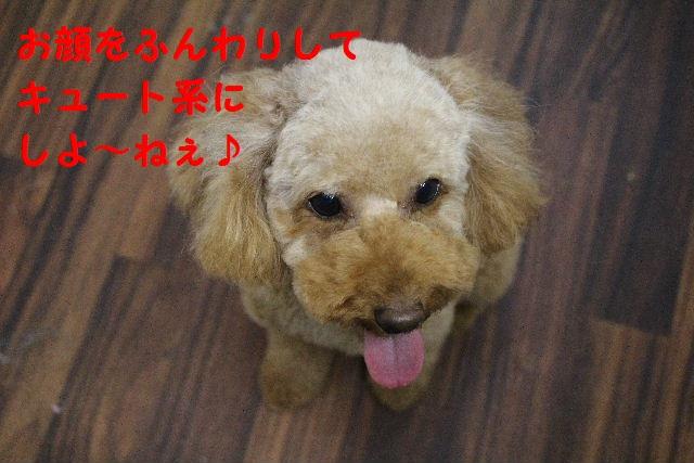 ハロウィ~ン♪_b0130018_20563799.jpg
