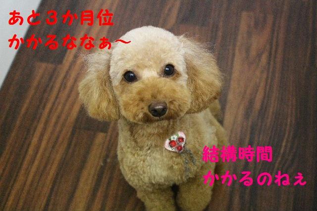 ハロウィ~ン♪_b0130018_2056515.jpg